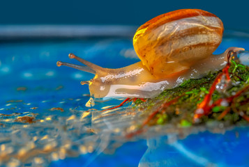 Foto op Canvas Vlinder Close up beautiful Snail in the garden