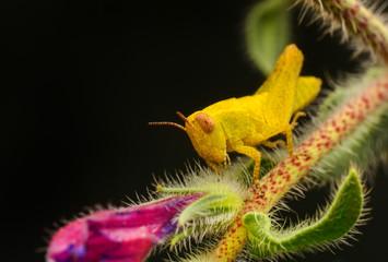 Fotobehang Vlinder Beautiful Grasshopper macro in green nature