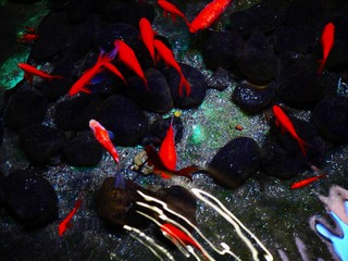 vvid pop art style fish in pond image