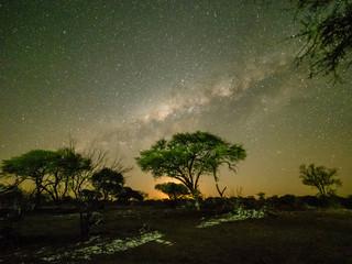 The milky way over acacia trees at night in the Okavango Delta, Botswana, Africa