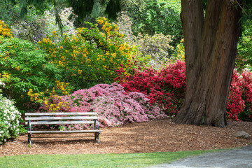 Poster Azalea Inviting Bench Surrounded By Colorful Azalea and Rhododendron Bushes
