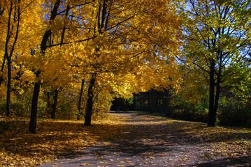 Aluminium Prints Autumn Nice sunny day golden autumn forest park landscape