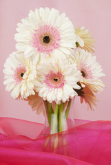Door stickers Gerbera Floral arrangement of white Gerber daisy flowers in a clear vase isolated on a fuchsia and pink fabric background. Vertical orientation