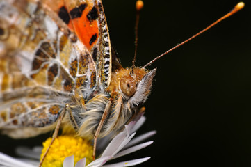 Foto op Canvas Vlinder Closeup beautiful butterfly sitting on the flower.