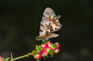 Fotobehang Vlinder Closeup beautiful butterfly sitting on the flower.