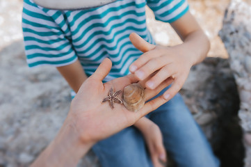 adult shows a child marine life, tiny starfish and seashell in fair skin hand