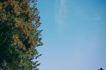 冬の杉の枝葉と青空