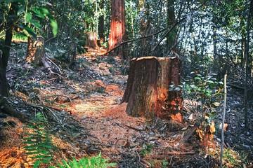 伐採された切り株のある森の中の風景