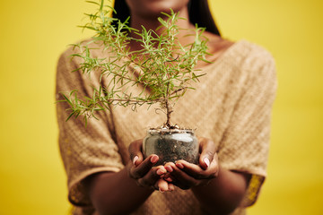 Unrecognizable black woman holding plant in glass pot, horizontal studio shot, yellow background