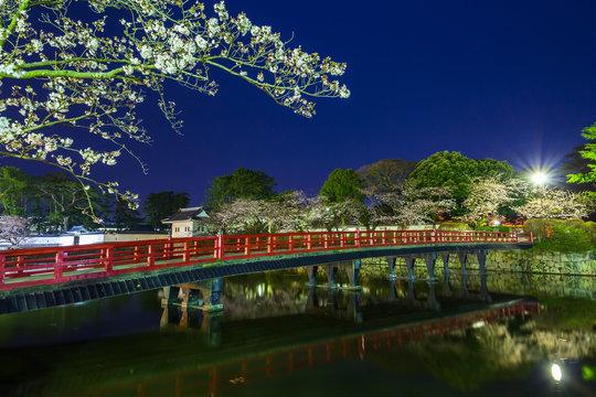 小田原城のお堀の桜