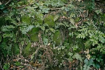 苔とシダ植物が生えた石垣