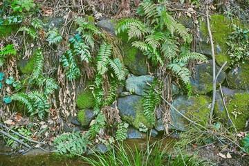 苔とシダ植物が生えた小川沿いの石垣