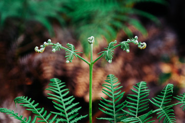 Young green fern leaf lush fresh pure natural background texture