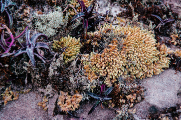 Close up white Lichen fungi, tillandsia and moss growing on stone in forest