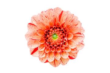 Fotobehang Dahlia Orange and pink dahlia flower head close up