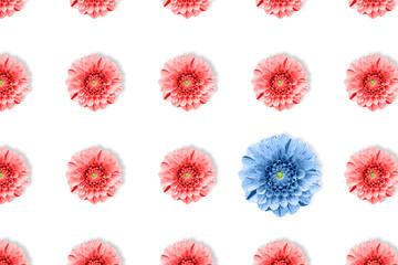 Fotobehang Dahlia Dahlia flower summer pattern in minimal style. on white background