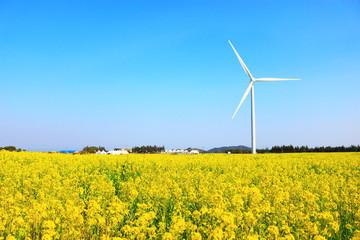 Photo sur Plexiglas Jaune 제주 유채꽃 축제장의 아름다운 봄 풍경이다.