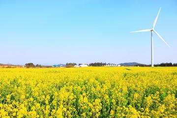 Foto op Canvas Geel 제주 유채꽃 축제장의 아름다운 봄 풍경이다.