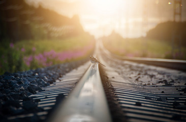 Small bird standing on a railroad track in sunset.