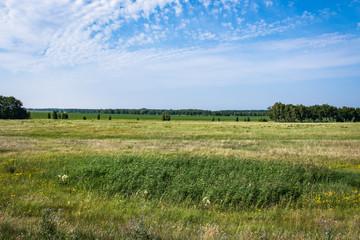 Foto op Plexiglas Pistache summer landscape forest and field