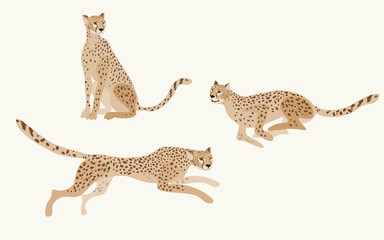 Two jaguars on a white background vector illustration. Picture with exotic african animals. All objects are grouped and isolated.