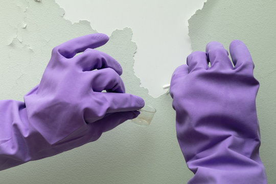 Closeup view on hands of home inspector wearing protective gloves and holding to check cotton bud with cone for mold spores
