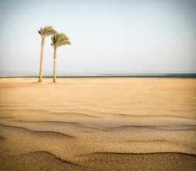 Summer beach of free space for your decoration and sunny day.