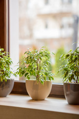Windowsill with living green plants over blurred street view