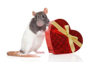 Rat with a heartfelt gift