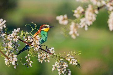 beautiful wild bird sits among flowering branches