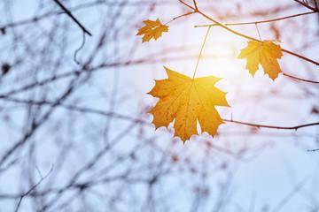 Autumn leaf on branch, copy space Fotobehang