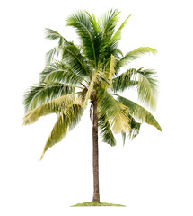 Photo sur Plexiglas Palmier Coconut palm tree isolated on white background