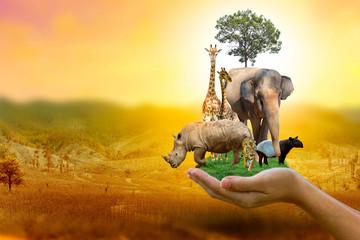 Fototapeta Wildlife Conservation Day Wild animals to the home. Or wildlife protection obraz