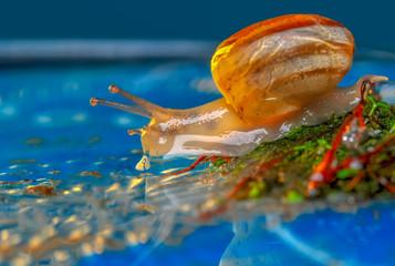 Foto op Aluminium Vlinder Close up beautiful Snail in the garden