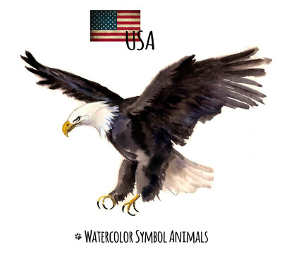Watercolor eagle on the white background