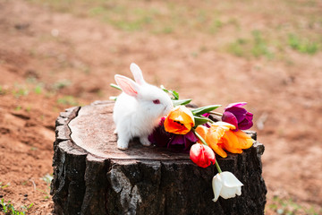 Easter bunny rabbit. Easter background with whiti cute rabbit. Little rabbit smelling a flower in the garden. Copy space.
