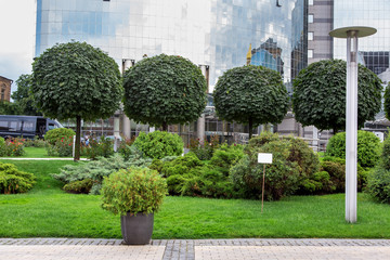Printed kitchen splashbacks Bonsai granite pot with an evergreen bush on a pedestrian sidewalk made of stone tiles in a park with a green landscape, greenery background theme, from the back the facade of a glass building. nobody.