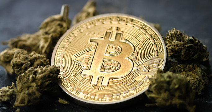 Bitcoin Cryptocurrency Coins with Medical Marijuana Buds. Cannabis Business Concept