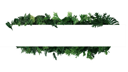 Deurstickers Planten Green leaves nature frame layout of tropical plants bush (ferns, climbing bird's nest fern, philodendrons, Monstera) foliage floral arrangement on white background with clipping path.