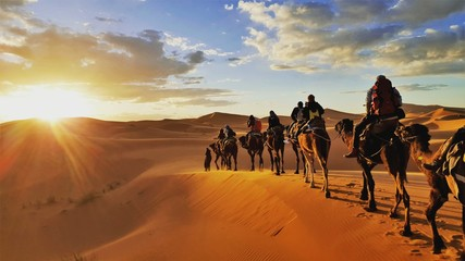 Photo sur Plexiglas Chameau camel caravan in the desert Sahara Morrocco