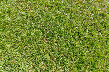 Green grass on a meadow