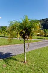 Hills landscape panorama in Vinales - Cuba