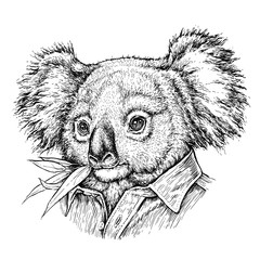 Photo sur Toile Croquis dessinés à la main des animaux Hand drawn portrait of Koala bear. Vector illustration isolated on white