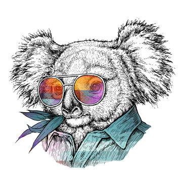 Hand drawn portrait of Koala bear in glasses. Vector illustration isolated on white