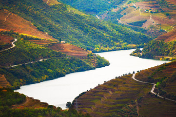 Poster Green blue Douro river valley with vineyards in Portugal. Portuguese wine region. Beautiful autumn landscape