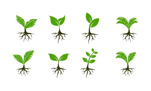 Plant seed set template vector icon