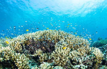 Foto auf AluDibond Riff coral reef with fish