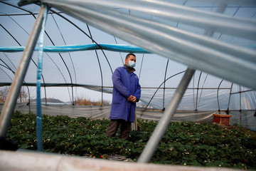 Strawberry farmer Li Zimin poses for a picture in a greenhouse at his farm where sales have been severely affected by the coronavirus outbreak in Jiujiang