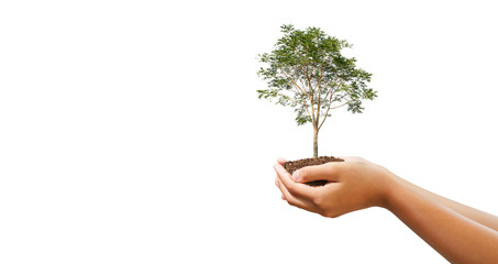 hand holdig big tree growing on white background. eco earth day concept