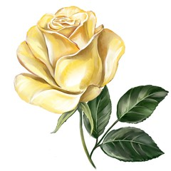 flower rose yellow with green leaves, art illustration painted with watercolors isolated on white background